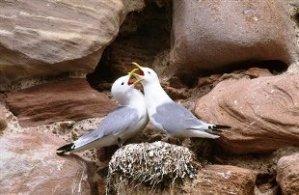 Birds on Bardsey Island