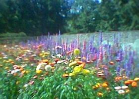 Aberglasny Gardens