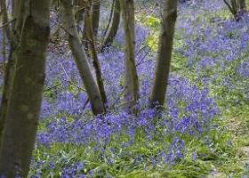 Sissinghurst in het voorjaar