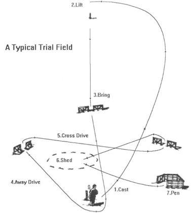 544px-Trialfield