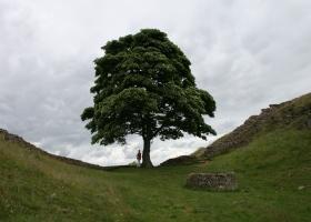 Hadrian's wall 5