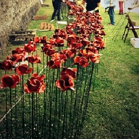 tower of London poppies in progress