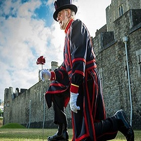 Yeoman-Warder-plants-first-poppy2_RLeaHairHRP