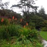 Arduaine Gardens (3) klein