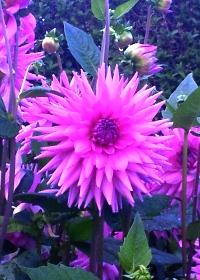 Geilston Garden in de herfst (12) klein