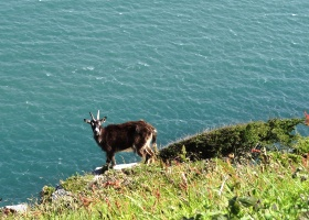 Wandeling Valley of Rocks geit op rand klein