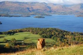 Coo bij Loch Lomond
