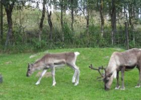 The Paddock in het Reindeer Centre Aviemore 2