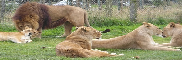 Blair Drummond Safari Park panorama
