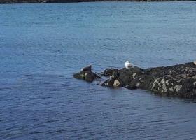 zeehonden klein