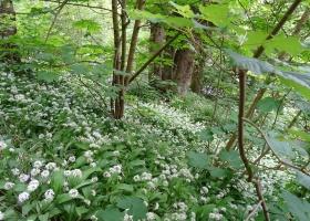 Cateran Trail dag 1 Blairgowrie naar Kirkmichael (19) klein