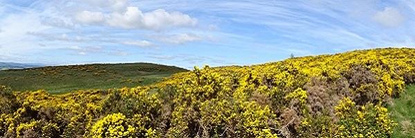 Schotland in begin juni panorama 600 x 200